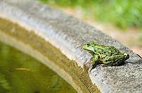 frog water.jpg