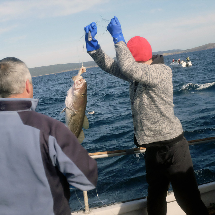 pulling cod - small