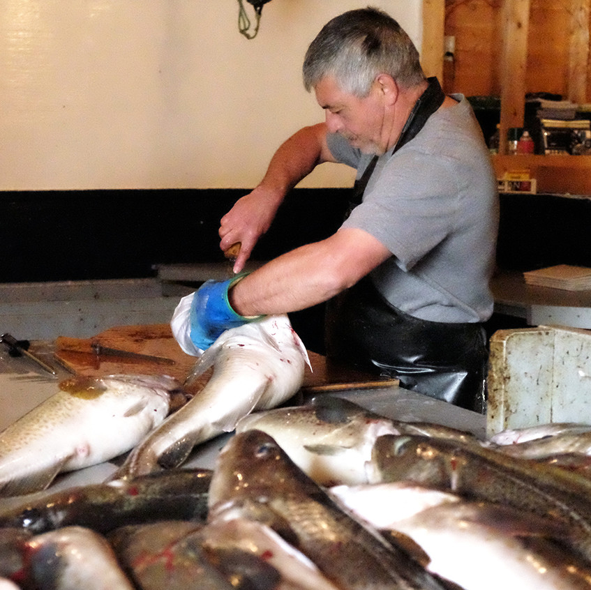 cod filleting 2 - small
