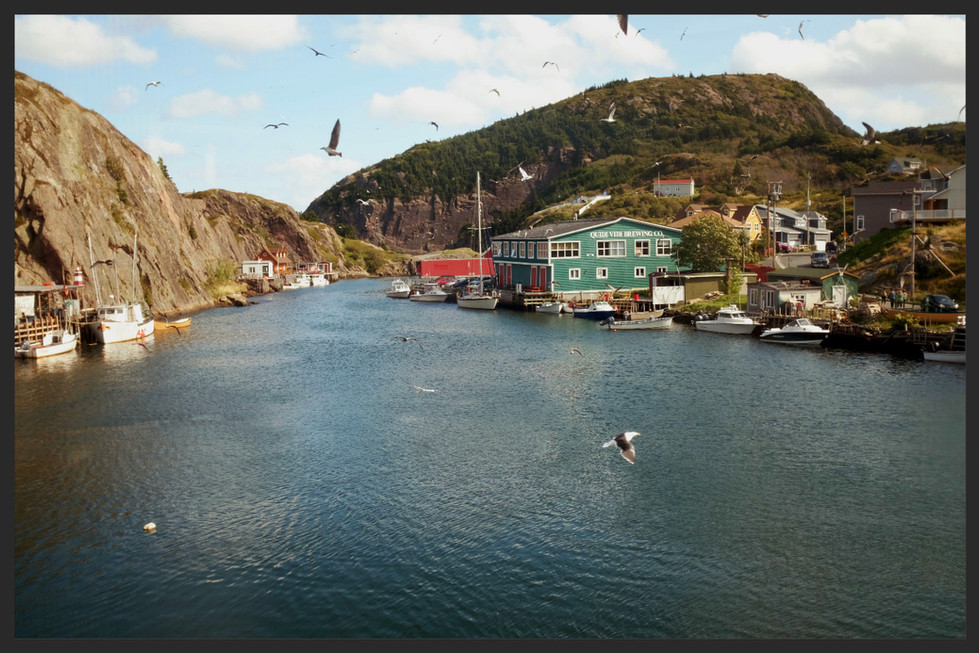 Newfoundland - closer to nature