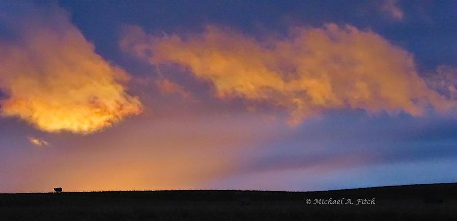 Lone Sheep At Sunset.jpg