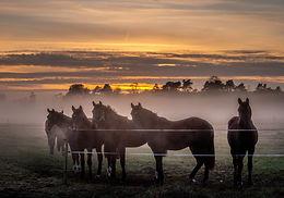 Hästar i dimma