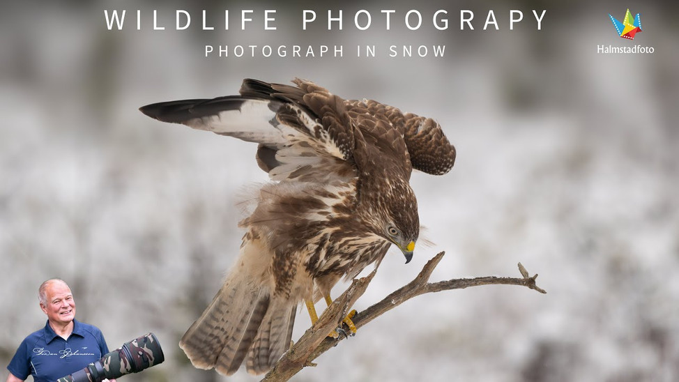 Bird photography from hide in snow with my Nikon Z6 II