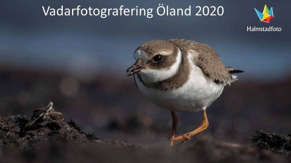 Vadarfotografering Öland