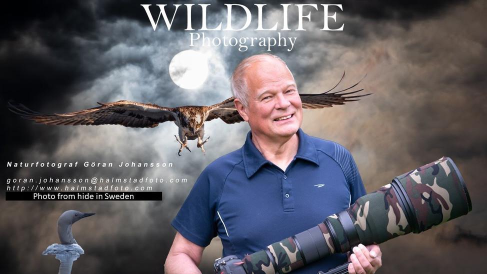 Bird photography from hide II See my hide II Nikon Z6 II