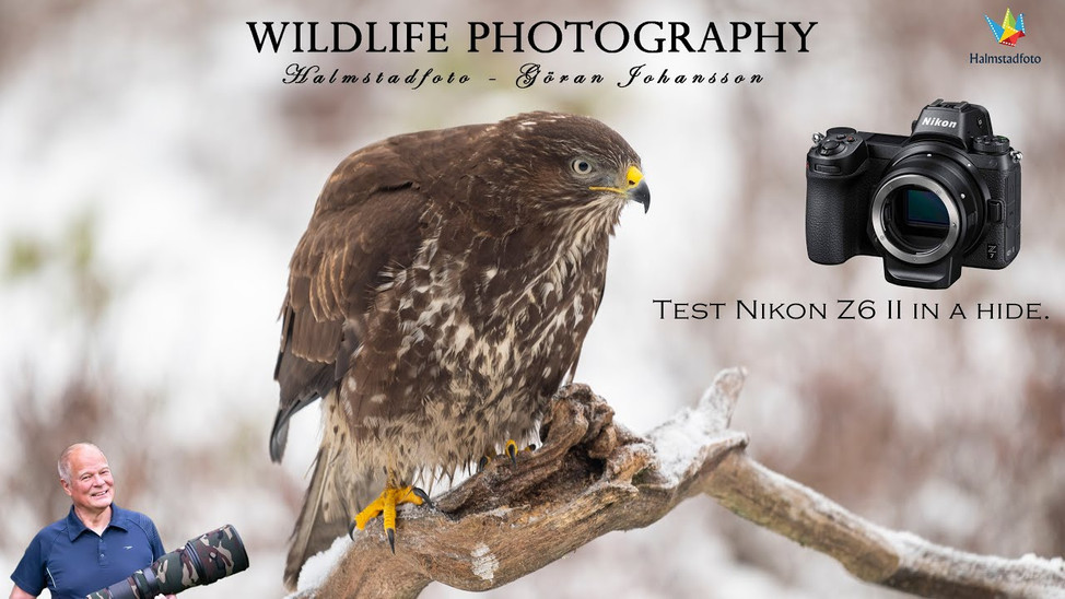 Bird photography II . My personal review.
