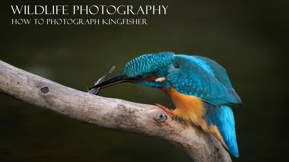 The the Kingfisher II My secret II Tips and tricks.