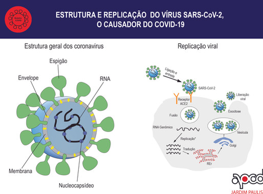 O que devemos saber sobre a biologia do causador do COVID-19?