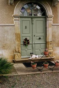 Ollie - Guard Dog, France (2019)