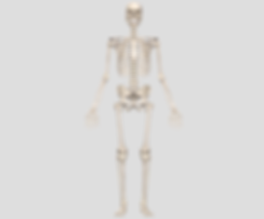 Skelett_Groß.png
