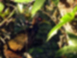 IMG_7235gmp.jpg