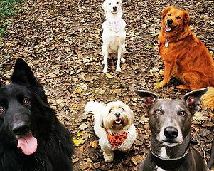 #walkies #fun #dogsofinstagram #dogwalk