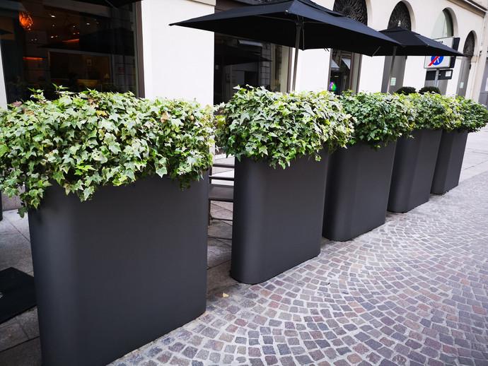 Amarylice - Plantes lyon - Aménagement terrasses lyon