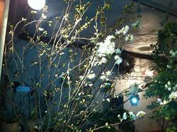 用賀、道端の草花