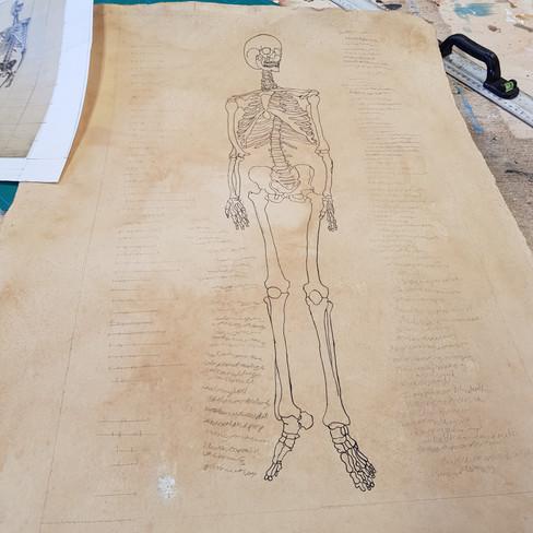 Skeleton Progression