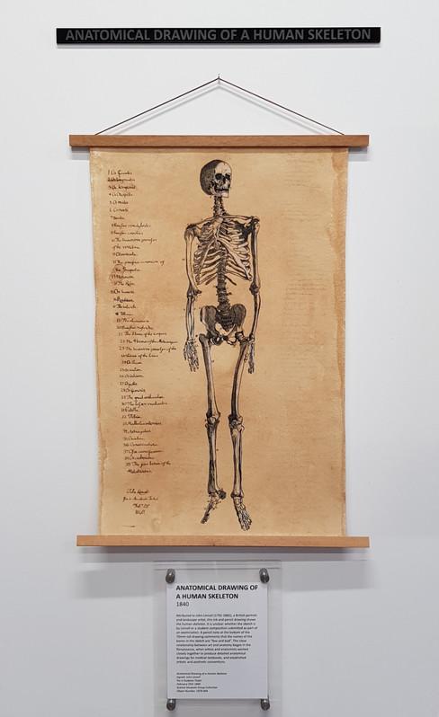 Skeleton Museum Replica