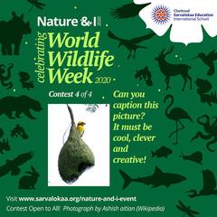 world-wildlife-week-c4.jpg