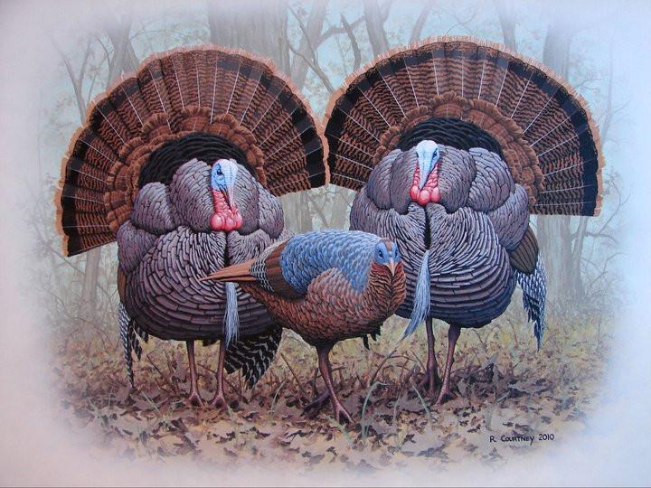 Tom Turkeys & Hen
