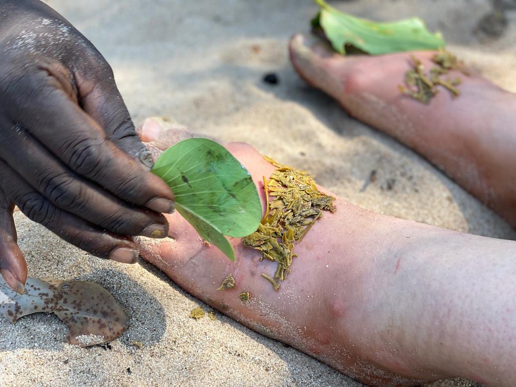 healing leaves.jpg
