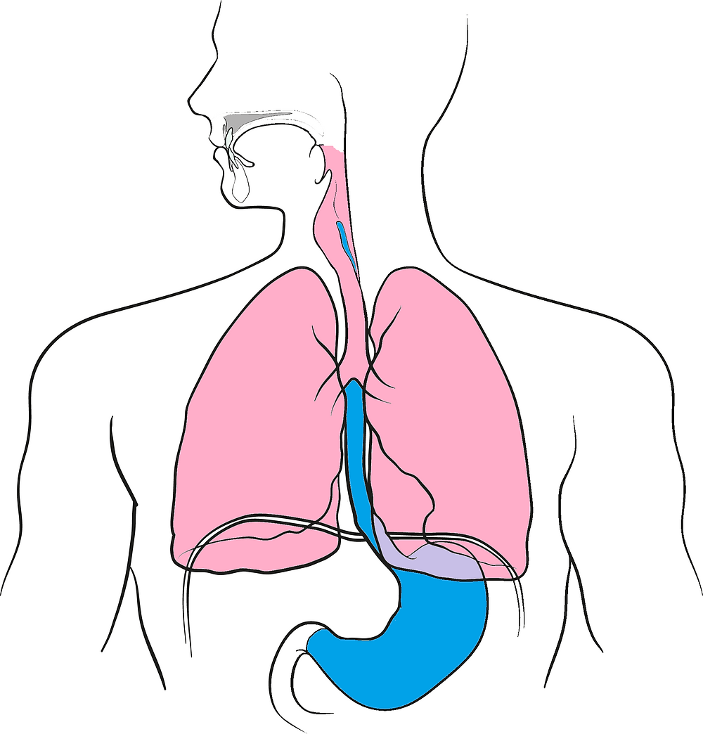 Pepsin, produced in the stomach should not rise up into the oesophagus and reach the airways.