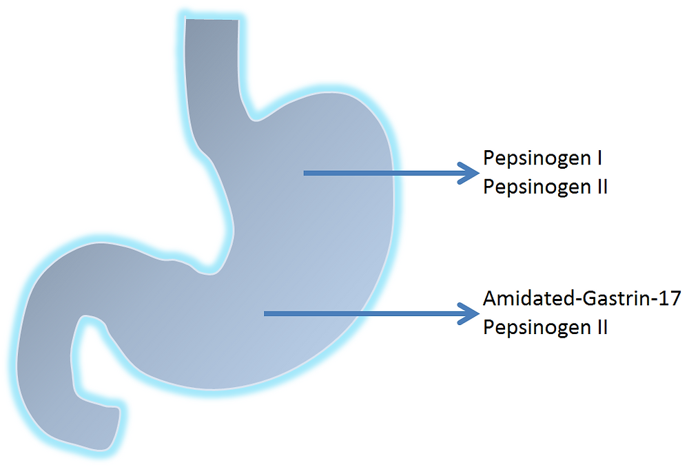 Stomach specific biomarkers predict atrophic gastritis