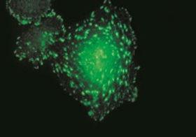 BIOHIT monoclonal antibodies