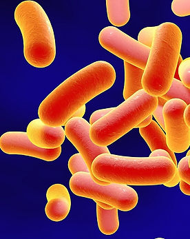 Gut mcrobiota analysis pre- and post treament