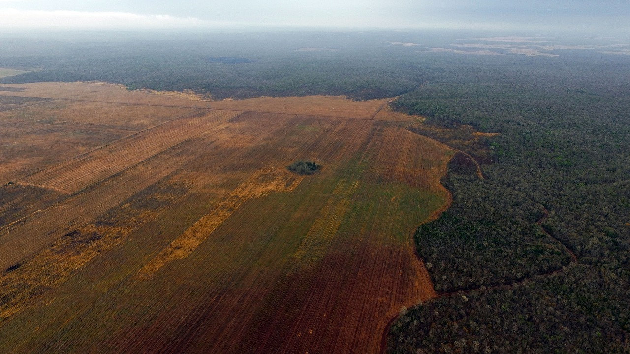 deforestacion campeche.jpeg