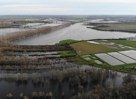 Le marais inondé