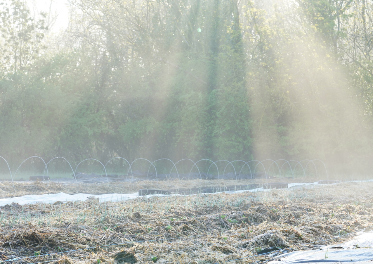 Lever de soleil hivernal
