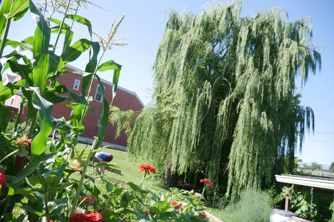 Blossom Alley (The Community Garden)