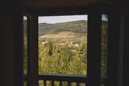Vue sur le vignoble depuis les chambres du Grand Petit Prince