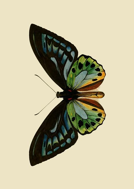 Blue green butterfly