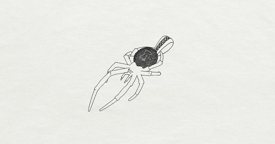 Nákres pavúk pre rytmusa