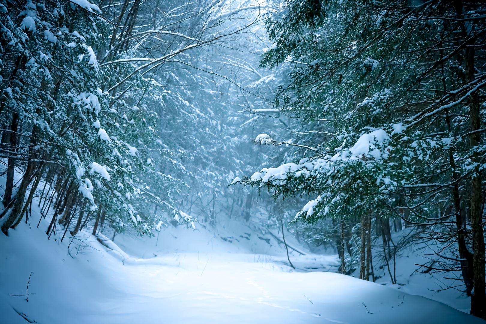 Winter's Guiding Light