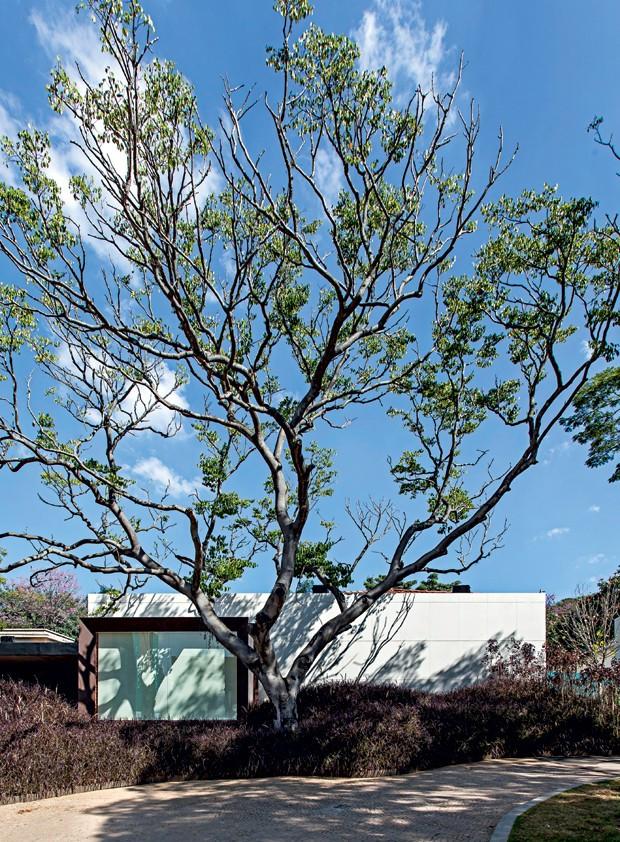 O arquiteto Roberto Migotto optou por usar o Dekton® como revestimento externo neste projeto (Foto: Carlos Piratininga/Divulgação)