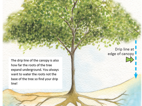 A right way to water trees?!
