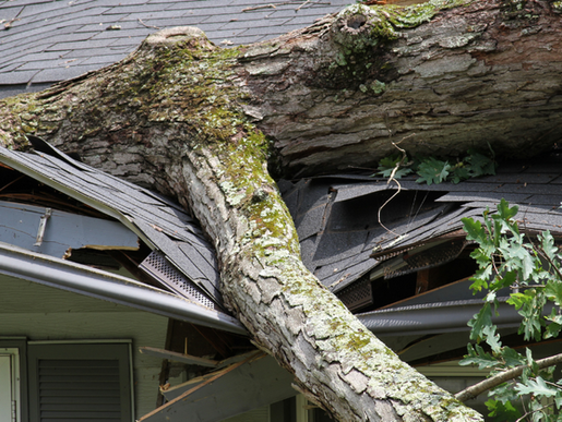 Understand & Fix Your Roof's Wind Damage