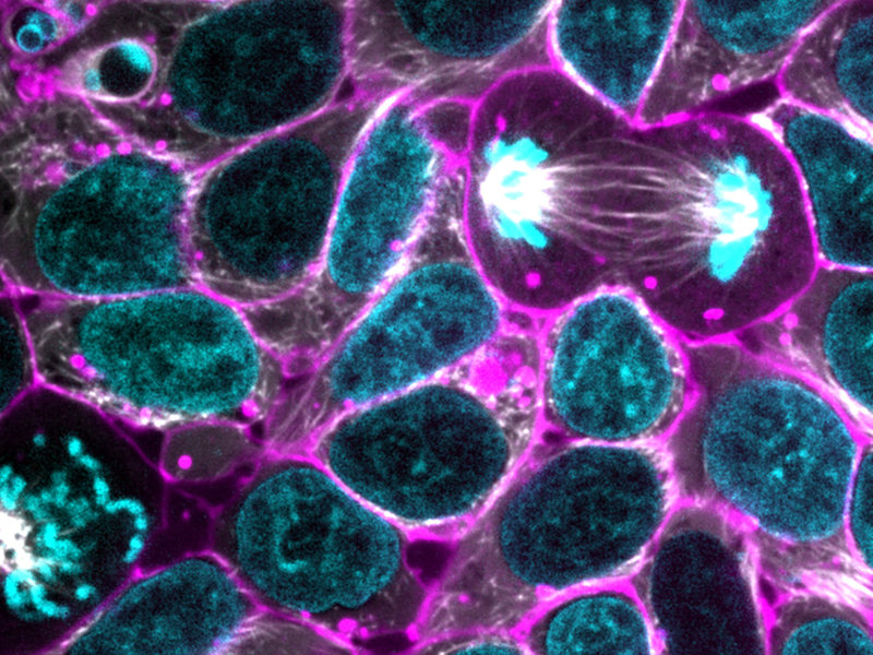 Photo of embryonic stem cells