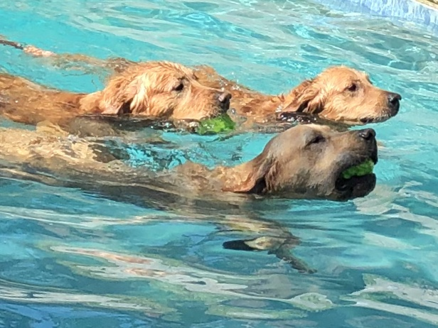 DOGS IN POOLS - Good or Bad Idea ?