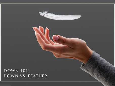 Down 101: Down vs. Feather