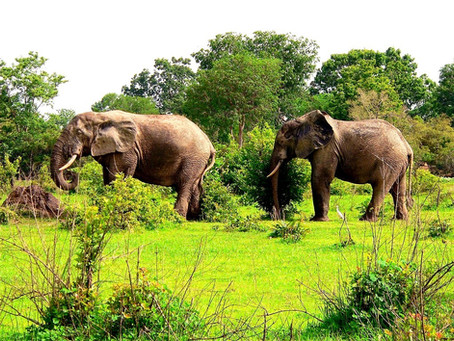 Enjoy Safari in Ghana