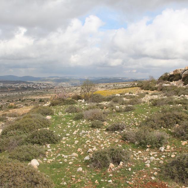 שדה בועז