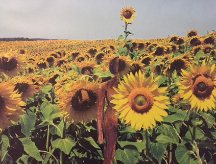9.Sunflower.jpg