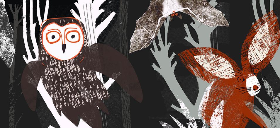 nocturnal animals3 copy.jpg