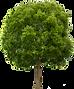 tree-plan-27863.png