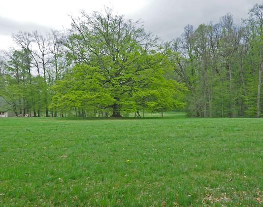 Ebersdorfer Landschaftspark Saalburg-Ebe