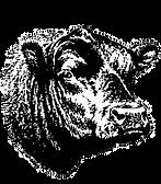 bull_head_edited.png