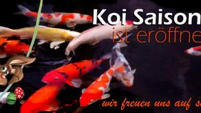 Die Koi-Saison ist eröffnet
