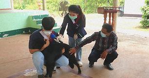 อบต.คำนาดี จัดอบรมทีมป้องกันโรคพิษสุนัขบ้า พร้อมลงพื้นที่บริการฉีดวัคซีนสุนัขและแมว